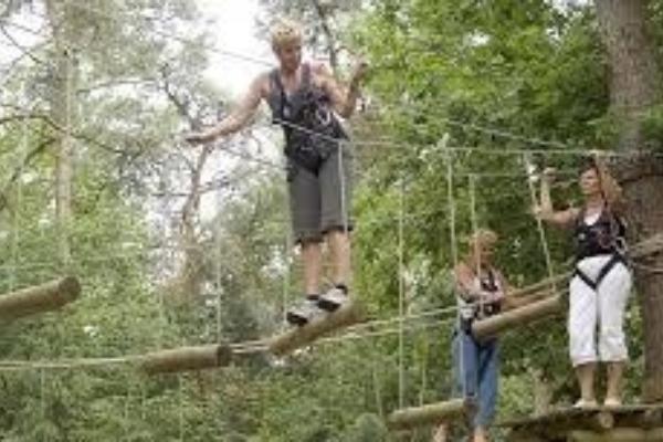 High Rope Adventure Kingimages