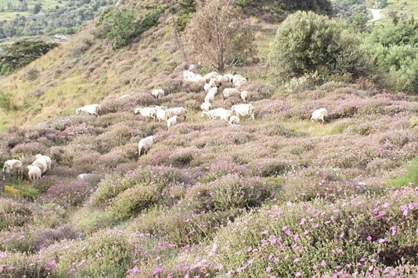 Huis Carina 2 de schapen