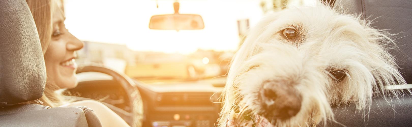 Waterproof pet nest for cars
