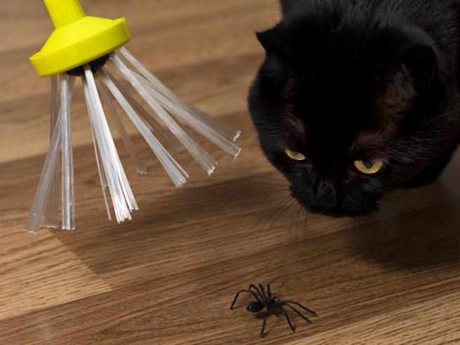 Spider Catcher Spinnenfänger