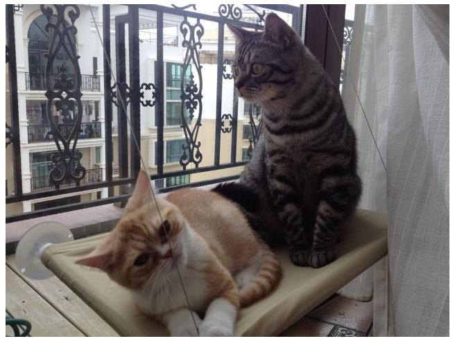 Lit de Fenêtre pour Chat