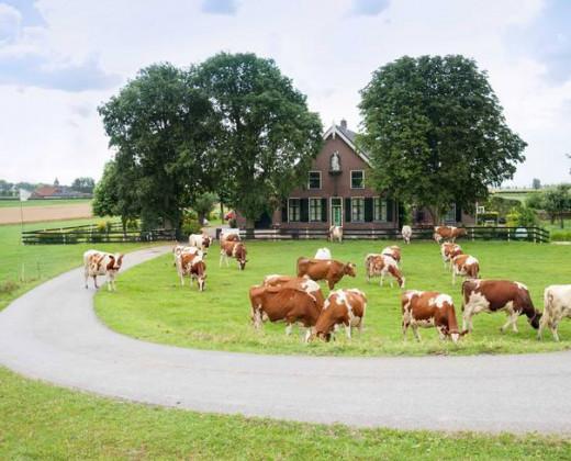 Natuurhuisje in Nieuwveen afbeelding