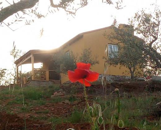 Natuurhuisje in Tó, mogadouro afbeelding