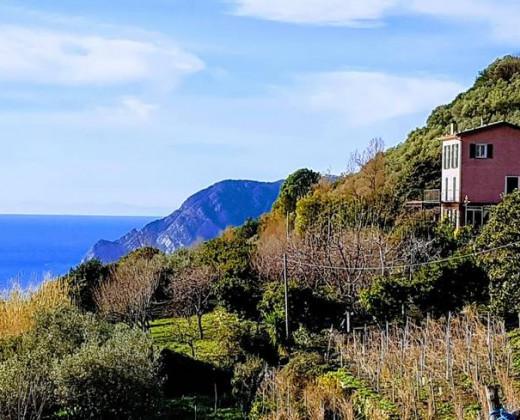 Natuurhuisje in Vernazza afbeelding