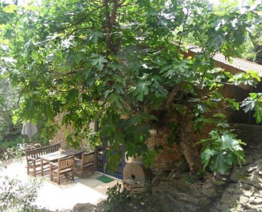 Natuurhuisje in Vila nune afbeelding