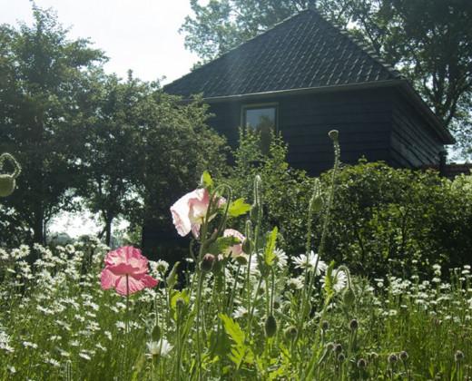 Natuurhuisje in Zuidwolde afbeelding