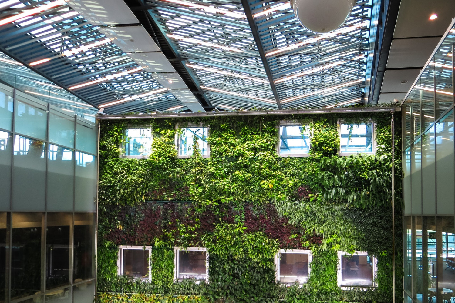 8 Reasons Why You Should Have a Living Green Wall in Your Home or Office afbeelding