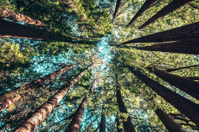 3 tips om zelf je CO2-uitstoot te verminderen afbeelding