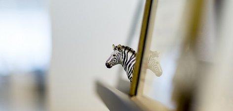 ההיפך משחור ולבן: הצצה למשרדי זברה