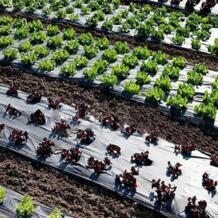 Овощной гибкий протектор для защиты от насекомых домашних фруктов мульча садовых растений пленка отражающая сельскохозяйственная PE перфорированная No name 4000005558572