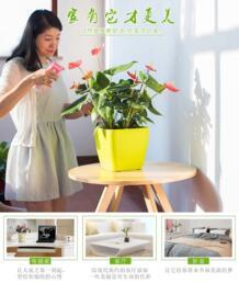 Ленивые цветочные горшки автоматическое хранение воды немецкий высококачественный полив краски FANYI 32811691385