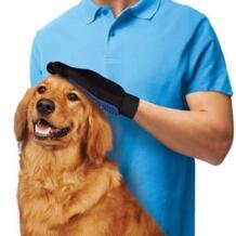 Chicdog 32806005869