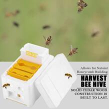 Вязка медовая расческа строительный сад контроль температуры пена пластиковый пчелиный улей легко ОБСЛУЖИВАНИЕ Pollination Box Авто Мед домашнего использования No name 32966654883
