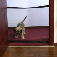 Собака ворота гениальный сетки ПЭТ ворота для собак безопасный предохранитель и установить собака изоляции сетка безопасности корпус Ограждения для собак No name 32896345125