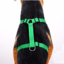 miss doggy 32775323351