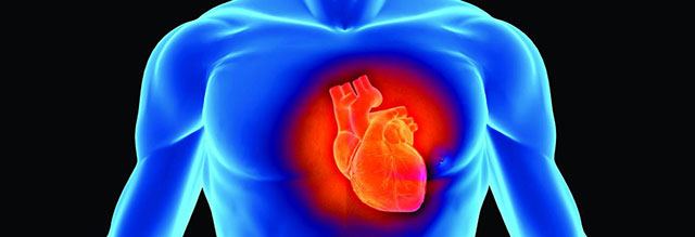 Infarctus, AVC : nouvelle voie médicamenteuse pour protéger le tissu cardiaque