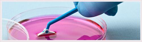 Des cellules souches au secours de la pigmentation de la peau