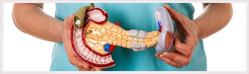 Cellules dendritiques : découverte d'une fonction contre la pancréatite aiguë