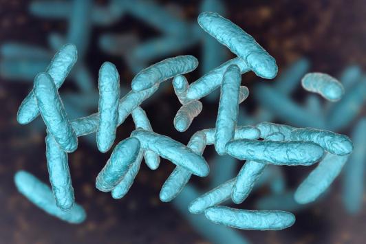 Microbiote intestinal :