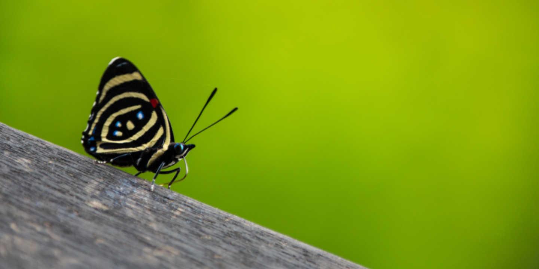 Schmetterling auf grünem Grund