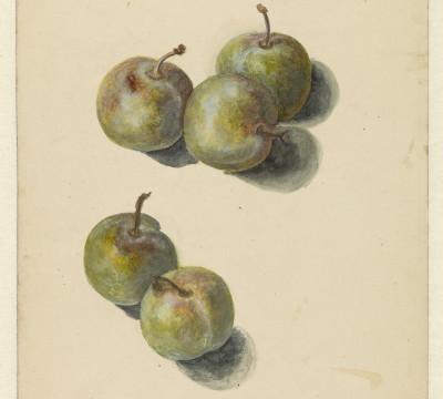 Edouard Manet, Study with five prunes, 1880, Museum Boijmans Van Beuningen. Former Collection Koenigs