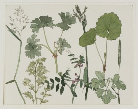 Dirk van Gelder, Wilde planten, 1925 Pen en inkt en waterverf, 22,8 x 29,2 cm Voorstudie voor de gelijknamige litho. Verzameling J., geschenk van de kunstenaar.