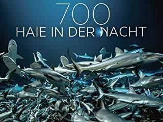 700 Haie in der Nacht Stream