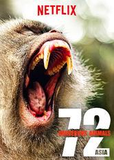 72 gefährliche Tiere: Asien Stream
