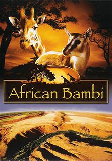 African Bambi stream