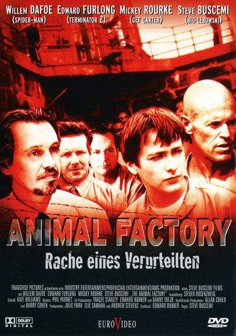 Animal Factory stream