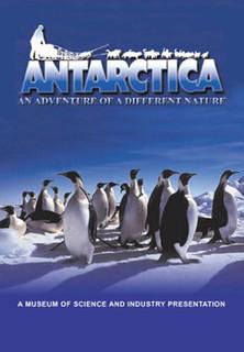 Antarctica - stream