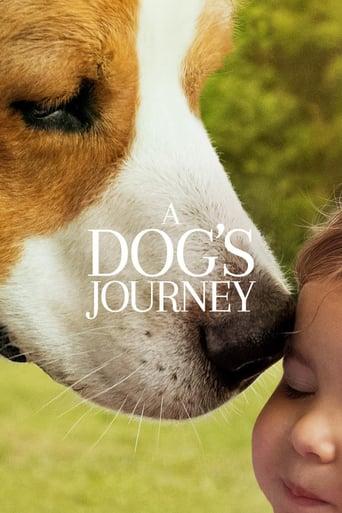 Bailey 2 - Ein Hund kehrt zurück Stream