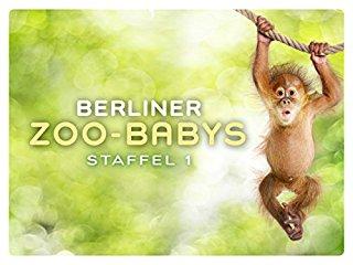 Berliner Zoo-Babys stream
