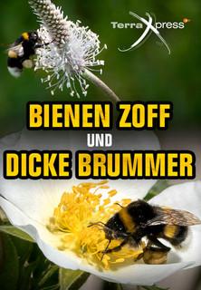 Bienen-Zoff und dicke Brummer stream