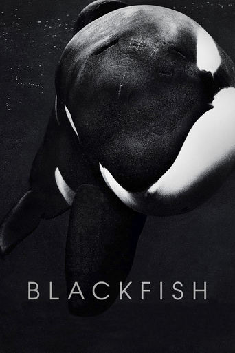 Blackfish: Der Killerwal – Never capture what you can't control Stream
