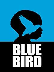 Blue Bird Stream