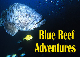 Blue Reef Adventures - stream