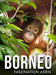 Borneo - Faszination Asiens Stream
