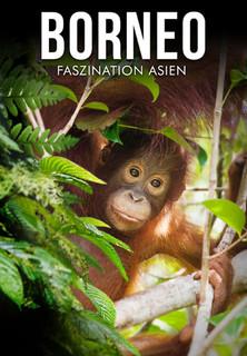 Borneo - stream