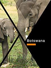Botswana stream