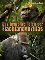 Das bedrohte Reich der Flachlandgorillas Stream