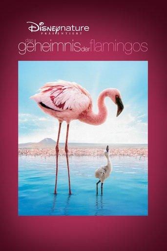 Das Geheimnis der Flamingos Stream