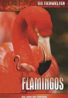 Das Leben der Flamingos stream