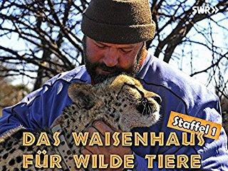 Das Waisenhaus für wilde Tiere stream