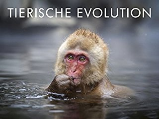 David Attenborough: Tierische Evolution stream