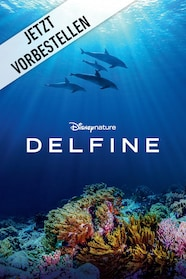 Delfine Stream
