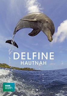 Delfine hautnah - Dreamteams stream