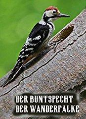 Der Buntspecht/ Der Wanderfalke stream