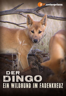 Der Dingo - Ein Wildhund im Fadenkreuz stream