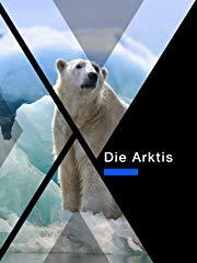 Die Arktis stream